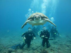 El-Puertito-Turtle-Divers