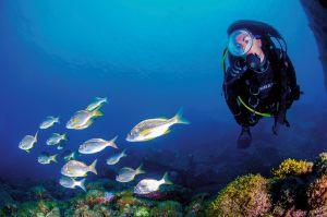 Gran-Canaria-diving